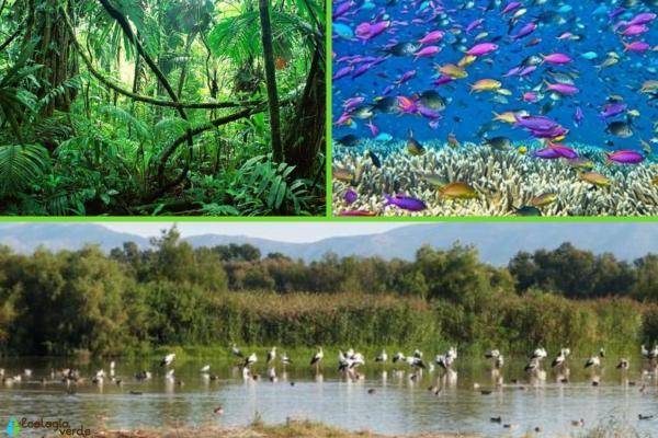 Qué es un ecosistema: definición para niños - Qué tipos de ecosistema hay