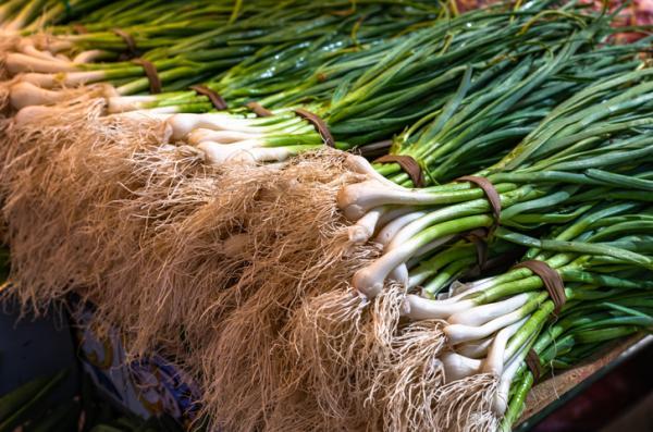 Tipos de raíces - Raíces ramificadas