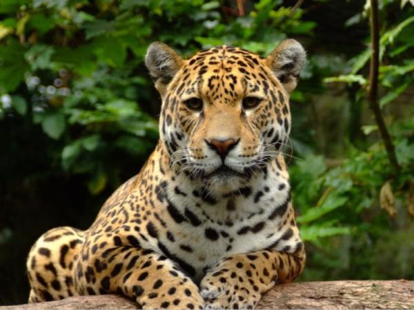Animales en peligro de extinción en el Amazonas