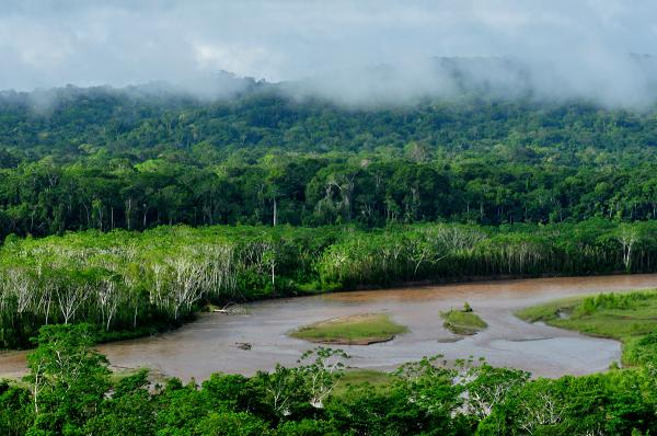 Animales en peligro de extinción en el Amazonas - Qué es el Amazonas y dónde se encuentra