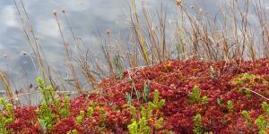 Plantas sin semillas: características y ejemplos