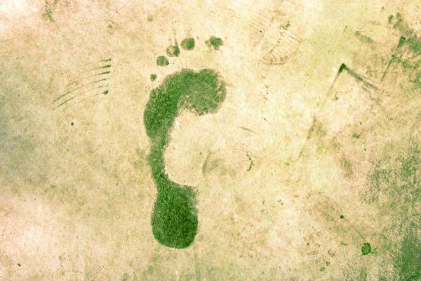 Cómo reducir la huella ecológica