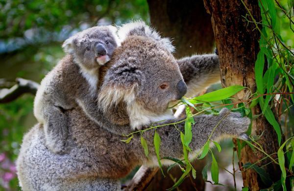 Animales que viven en los árboles