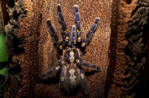 Animales que viven en los árboles - Arañas