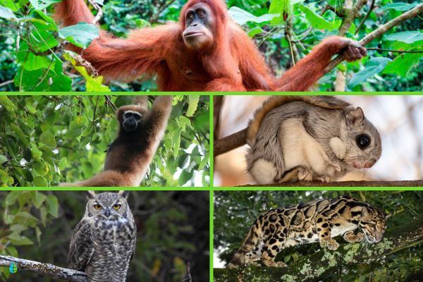 Animales que viven en los árboles - Otros animales que viven en los árboles