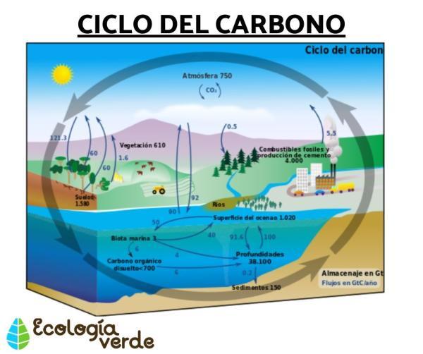 Cuál es la importancia del carbono en los seres vivos - Qué es el carbono