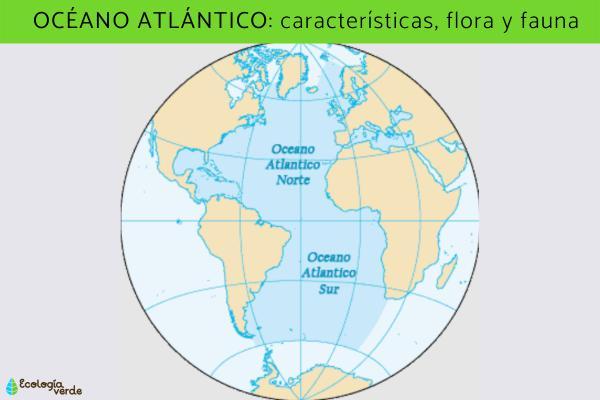 Océano Atlántico: características, flora y fauna