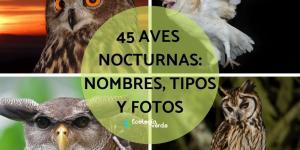 Aves nocturnas: nombres y tipos