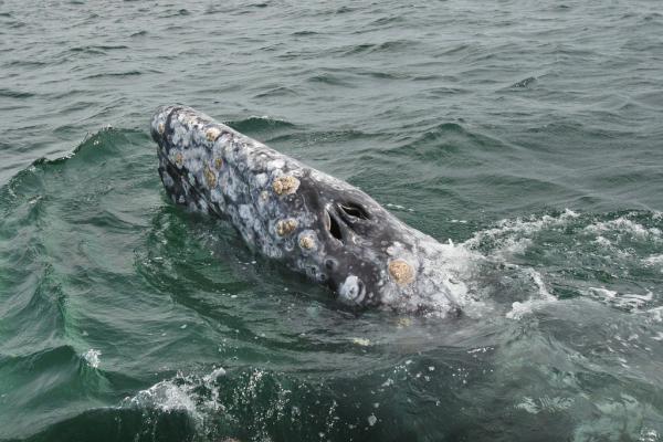 Cómo respiran los animales acuáticos - Cómo respiran los animales acuáticos con respiración pulmonar