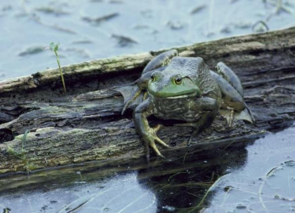 Cómo respiran los animales acuáticos - Respiración cutánea o por la piel en animales acuáticos
