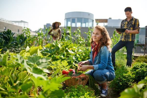 Cuáles son los alimentos orgánicos e inorgánicos: ejemplos - Ventajas e inconvenientes de los alimentos orgánicos