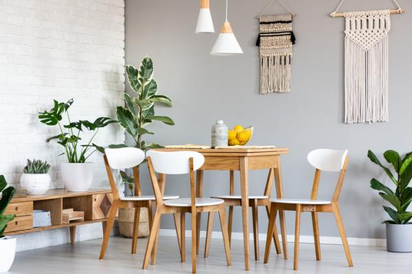25 plantas de interior altas - Ficus para interiores