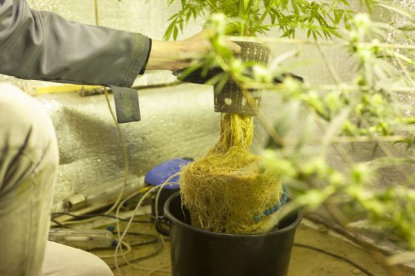 Jardines verticales para cuidar el ecosistema urbano - plantas hidropónicas - Lista de plantas hidropónicas