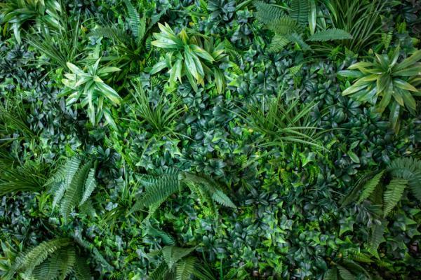 Jardines verticales para cuidar el ecosistema urbano - plantas hidropónicas - Qué es un jardín vertical y sus beneficios