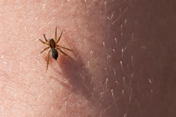 La importancia de las arañas - Importancia de las arañas en la medicina