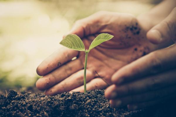 Qué es el medio ambiente: definición y resumen - Qué es el medio ambiente - definición sencilla y resumen