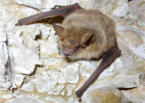 16 animales que respiran por la piel - Reptiles y mamíferos con respiración cutánea