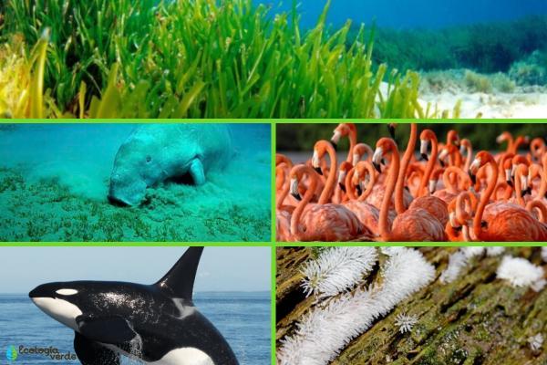 Factores bióticos: qué son, características, clasificación y ejemplos - Ejemplos de factores bióticos acuáticos