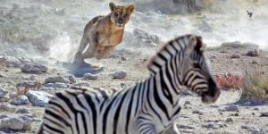 Depredadores: qué son, tipos y ejemplos