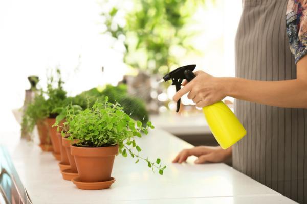 Planta de orégano: cuidados y para qué sirve - Cuidados de la planta de orégano - guía práctica