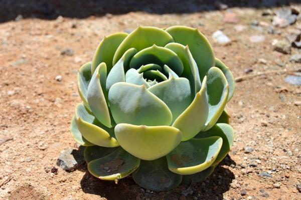 Plantar suculentas: cómo hacerlo - Cómo plantar suculentas en suelo