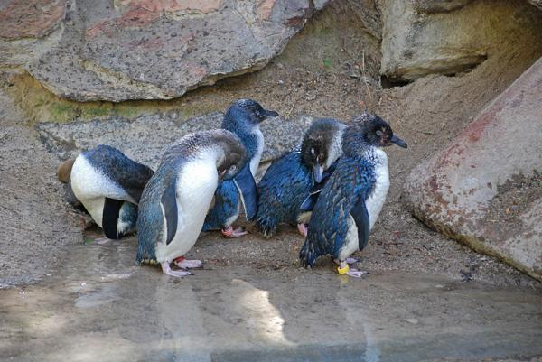 Dónde viven los pingüinos y de qué se alimentan - ¿Dónde viven los pingüinos?