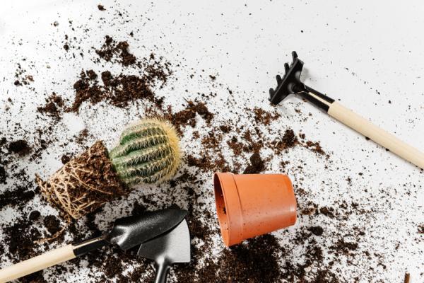 Cuidados de un cactus - Qué sustrato usar para cactus