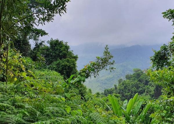 Tipos de selvas y sus características - Tipos de selva según humedad