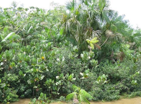 Tipos de selvas y sus características - Tipos de selva según latitud