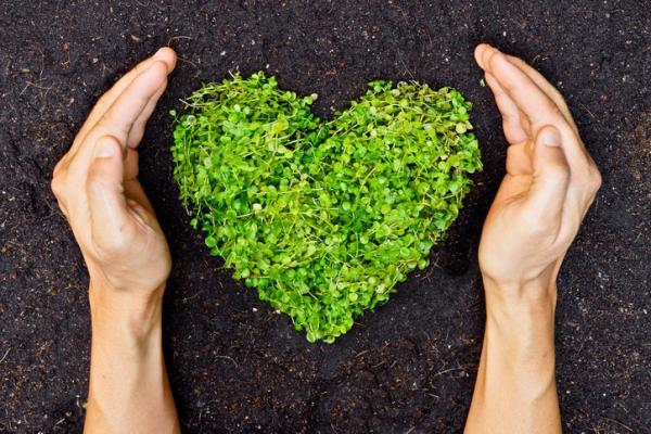 Conservación del suelo: importancia, técnicas y prácticas