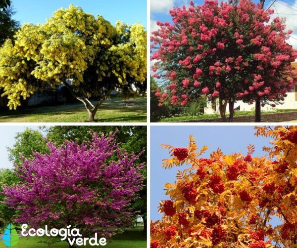 20 árboles ornamentales