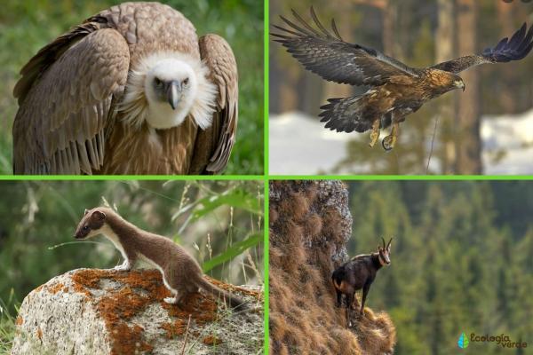 Flora y fauna de Cataluña - Fauna de Cataluña