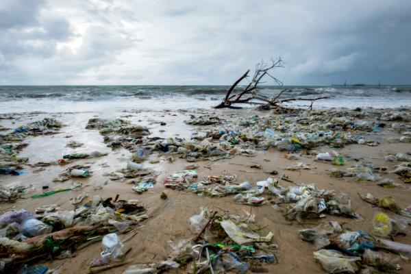 Degradación ambiental: qué es, causas, consecuencias y ejemplos