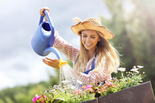Cuándo regar las plantas - Errores comunes a la hora de regar plantas
