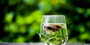 Propiedades del té verde ecológico