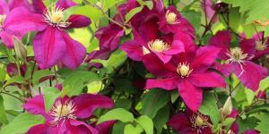 Plantas de exterior fáciles de cuidar