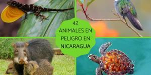 Animales en peligro de extinción en Nicaragua