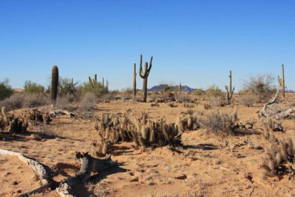 Cuáles son las regiones naturales de México - Desiertos de México