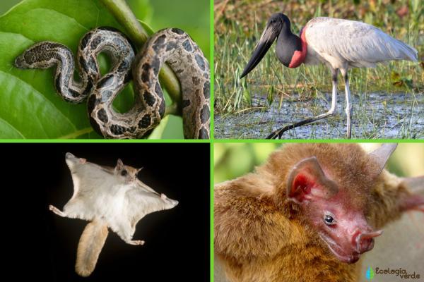 Animales en peligro de extinción en Nicaragua - Otros animales en peligro de extinción en Nicaragua
