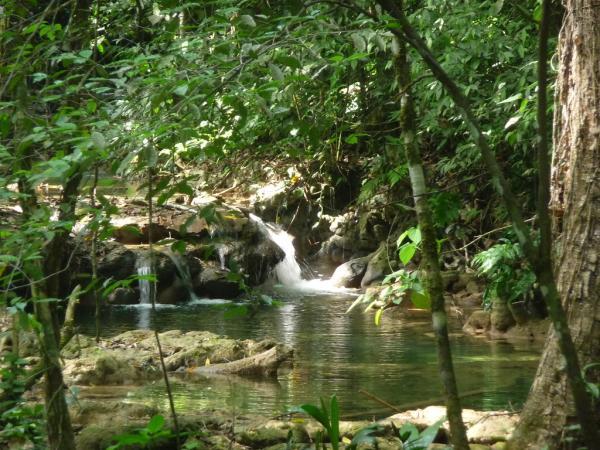 Cuáles son las regiones naturales de México - Selva húmeda de México