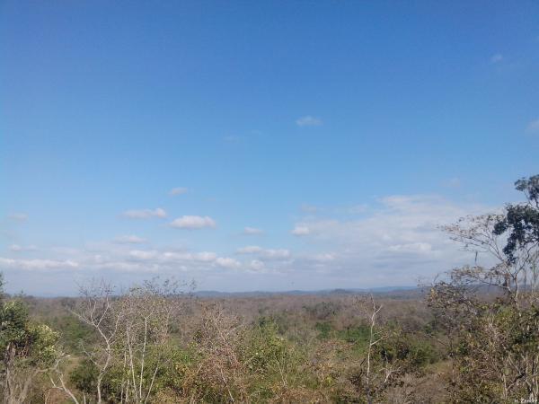 Las ecorregiones del Perú y sus características - Bosque seco ecuatorial