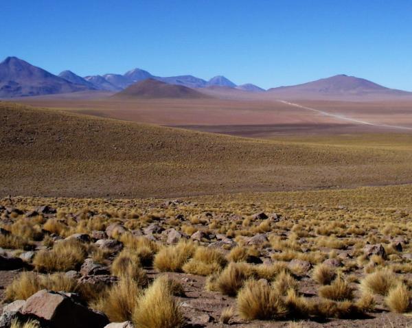 Las ecorregiones del Perú y sus características - La puna