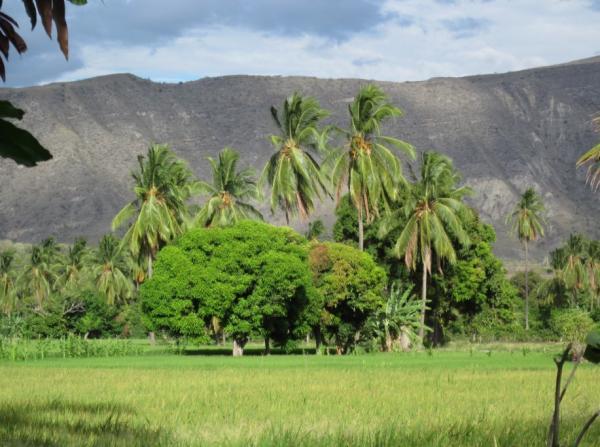 Las ecorregiones del Perú y sus características - Sabana de palmeras