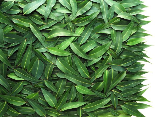 Por qué las plantas son verdes
