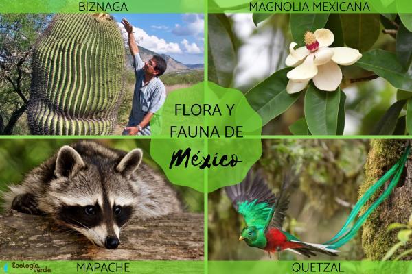 Flora y fauna de México