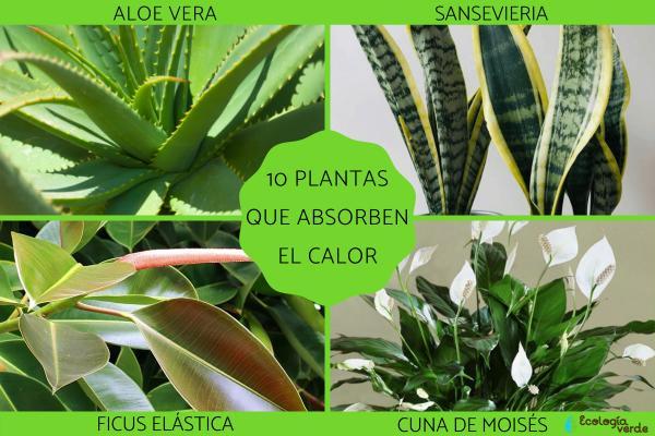 Plantas que absorben el calor