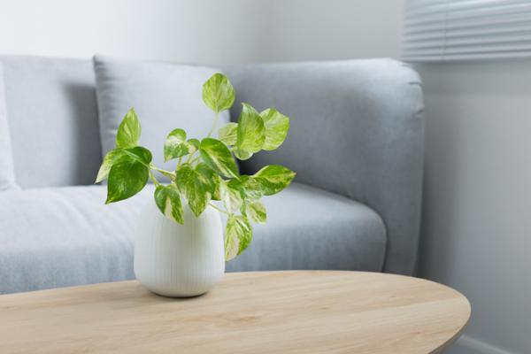 Plantas que absorben el calor - Poto