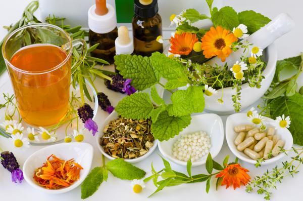 Fitoterapia: ¿qué es y cómo usar las plantas medicinales?