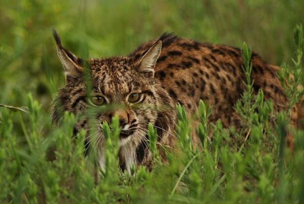 Características de los animales salvajes y domésticos - Selección natural y adaptación al entorno de los animales salvajes y domésticos