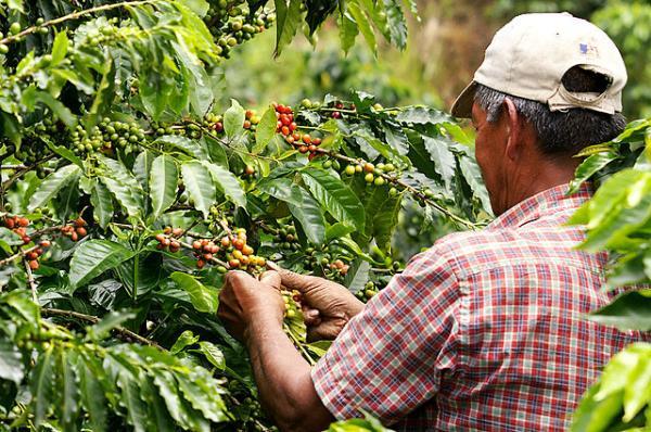 Recursos naturales de Colombia - Café